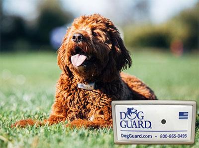 DomeLabels Dog Tag - Long lasting